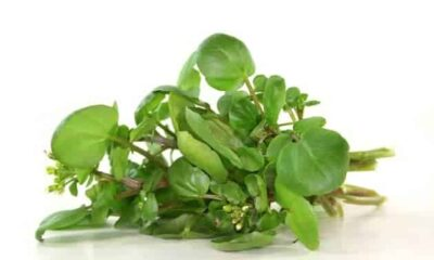 8 Tasty And Healthy Benefits Of Watercress