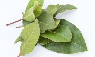 9 Surprising Health Benefits Of Bay Leaves