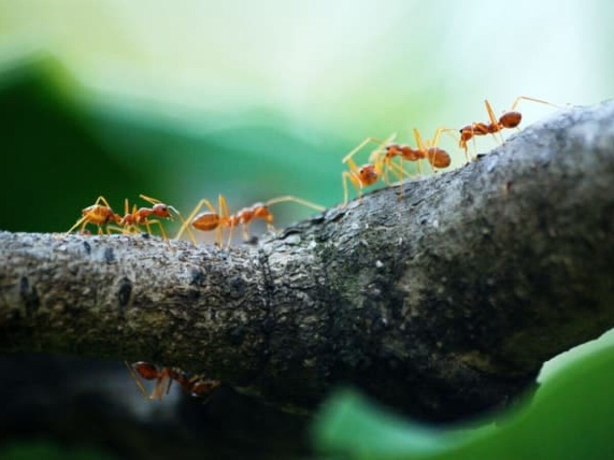 How To Get Rid Of Sugar Ants Naturally Forever And Never See Them Return,What Do Cats Like To Do With Humans