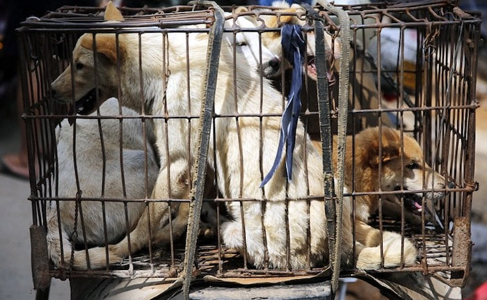 UK ban on cats and dogs blocked as ' offending ' Asian countries