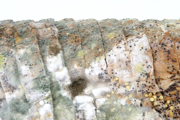 Eight Tips To Stop Mold Growth In Your House
