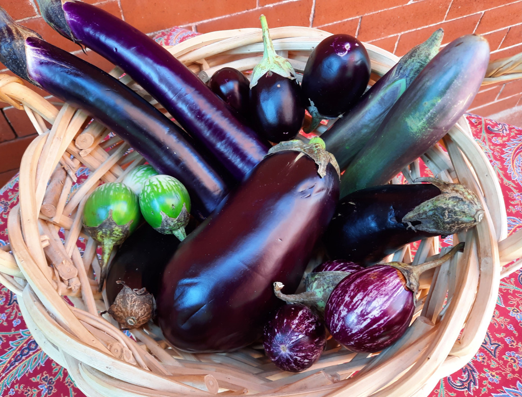 Get Cooking: The sponge that is eggplant