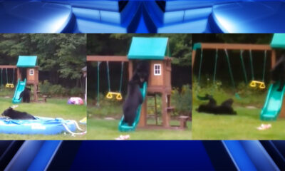 VIDEO: Three bears caught playing in backyard pool in Westfield