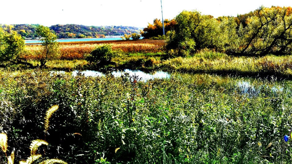 'Painting in the Park' Saturday hosted by the Lower Phalen Creek Project in St. Paul