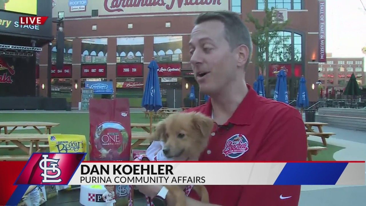 Take your dog to a ballgame at Busch Stadium during this special event