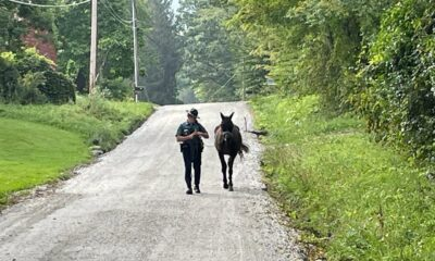 Loose horse in the Berkshires caught by Massachusetts State Police