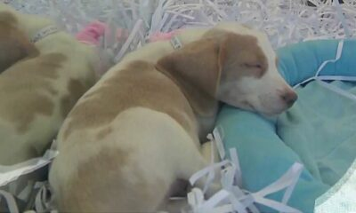 Rally in support of Puppy Mill Pipeline bill planned Saturday, Sept. 18 at Colonie Center