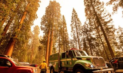 Sequoia National Park Fire: Flames enter Giant Forest, home to world's largest trees