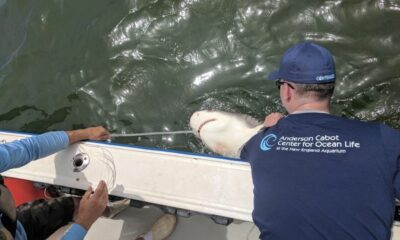 Some shark species better at surviving catch and release: New England Aquarium-led study