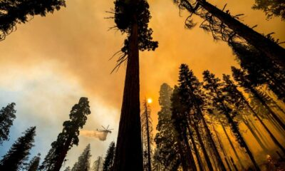 Giant California sequoias saved from wildfire, others may not be so lucky