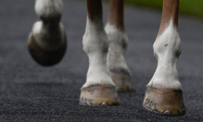 Horse trainer ordered to pay $600K+ in wages, damages