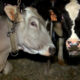 Lawmakers in Northeast seek USDA support for organic dairy farmers