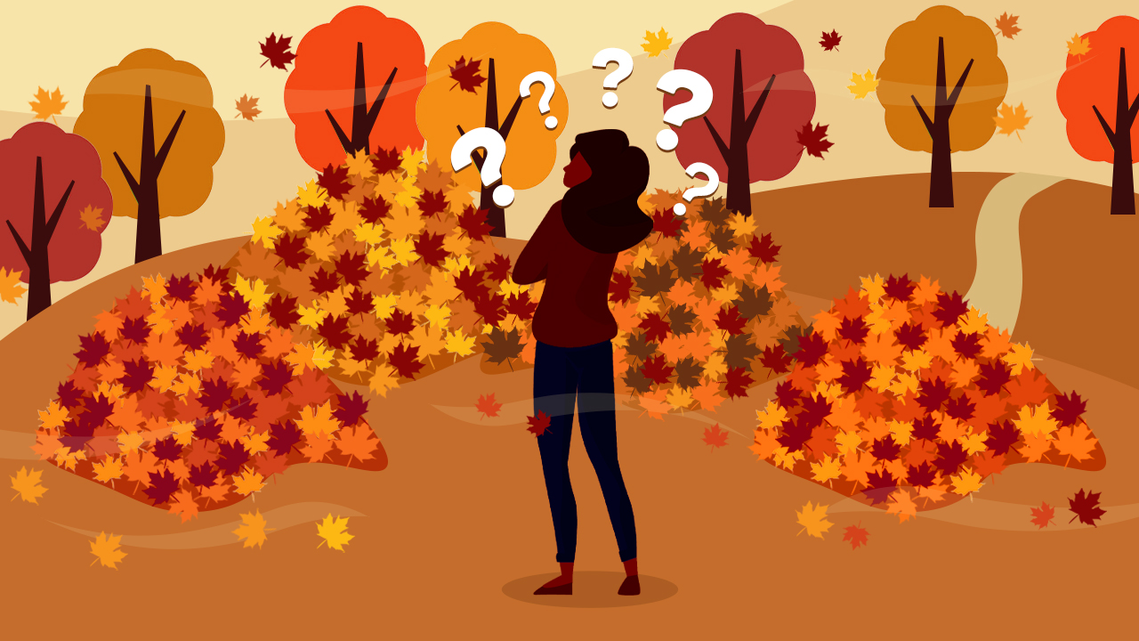 Products that make picking up leaves a breeze