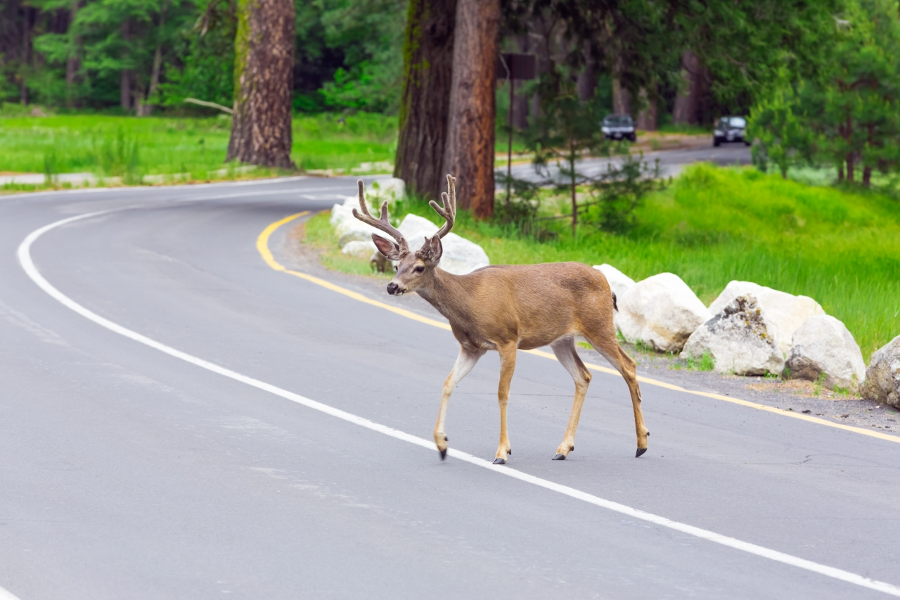 Fall means more deer on the road: 4 ways time of day, month and year raise your risk of crashes