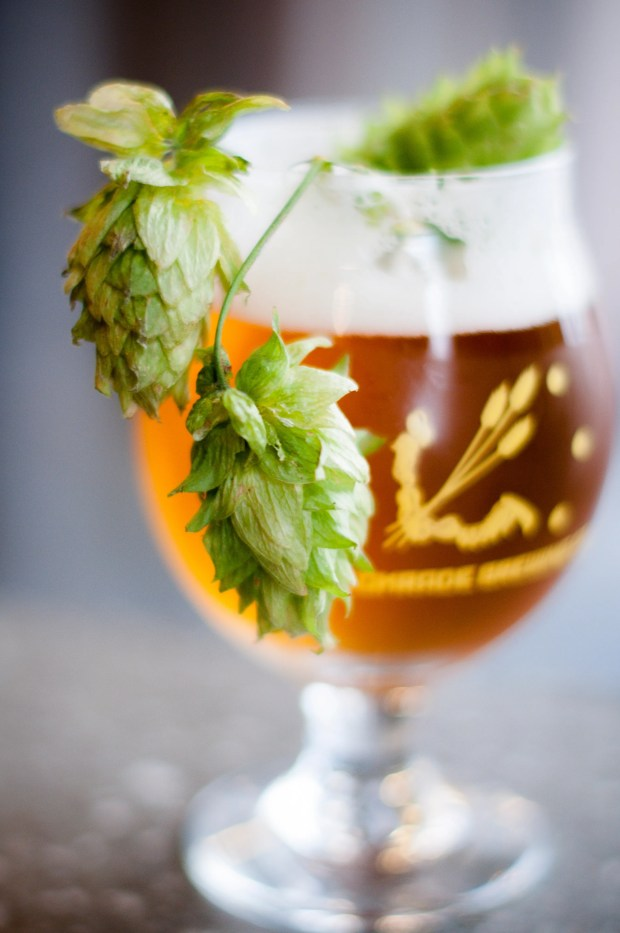 1632832316 867 'Tis the season — for fresh hop beers