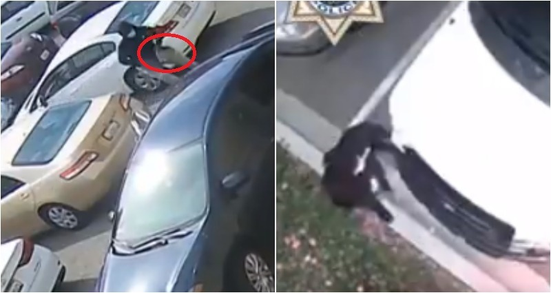 Bay Area robberies suspects caught