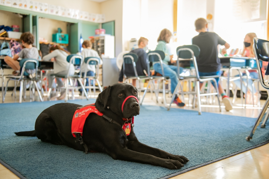 Assistance dog in Arlington eases back-to-school stress in kids [+video]