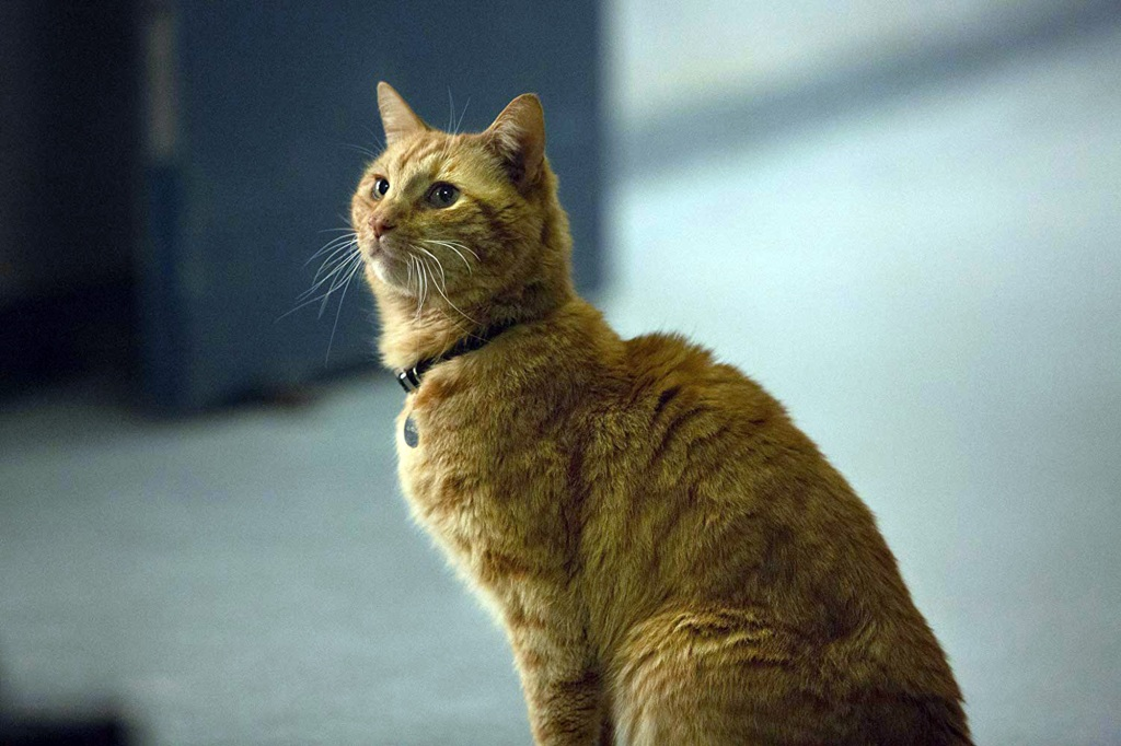 Ask the Vet: Does my fat cat have diabetes?