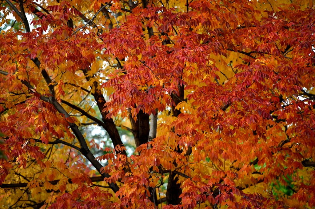 The most perfect Denver leaf-peeping posts we've seen this fall